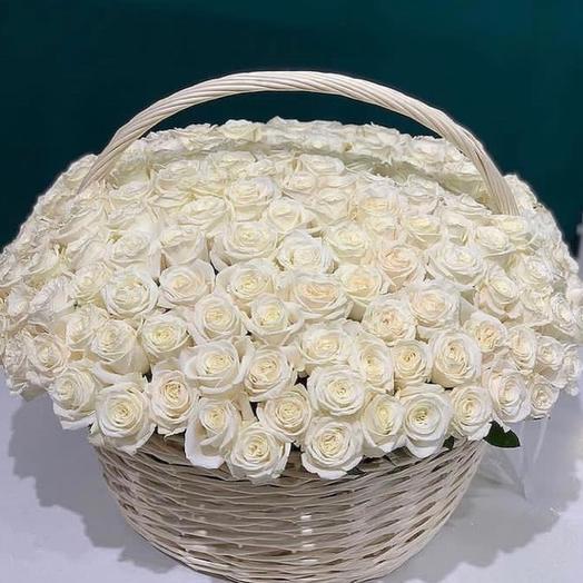 131 Роза