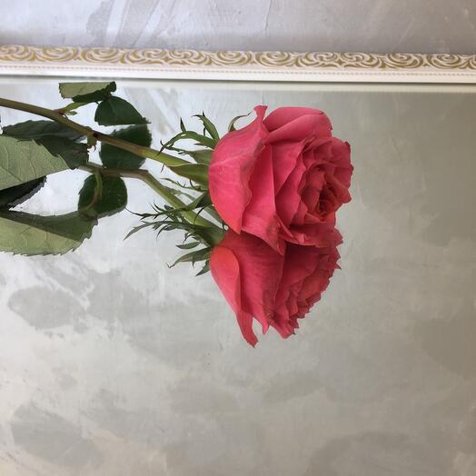 Роза Роза hard rock