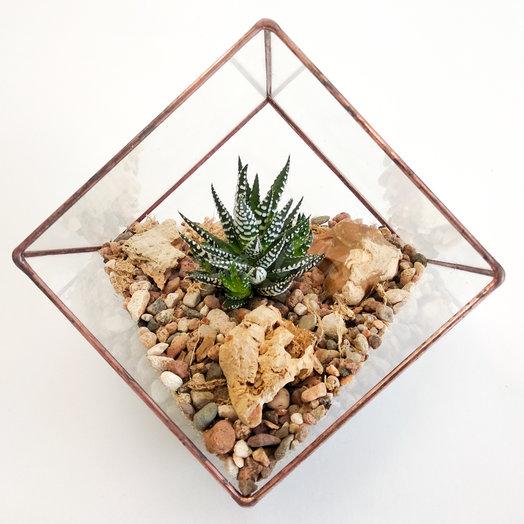 Флорариум с хавортией в малом кубе