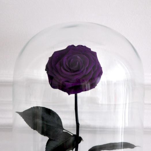 VAMPIRE VIOLET ФИОЛЕТОВАЯ РОЗА В КОЛБЕ KING SIZE: букеты цветов на заказ Flowwow