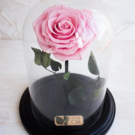 Розовая роза в колбе: букеты цветов на заказ Flowwow