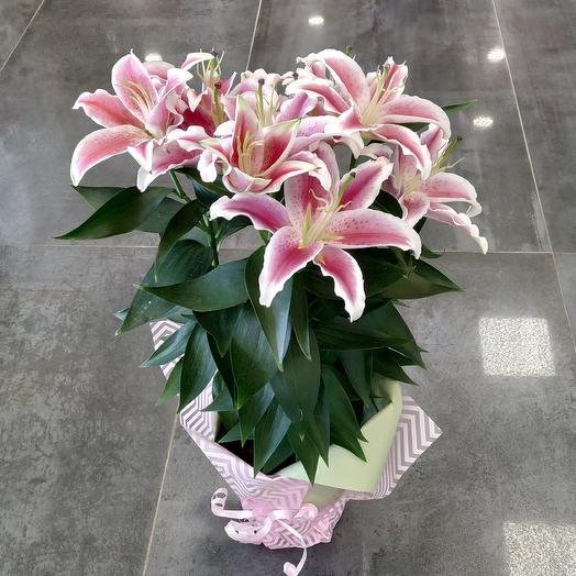 Ароматная лилия в горшке: букеты цветов на заказ Flowwow