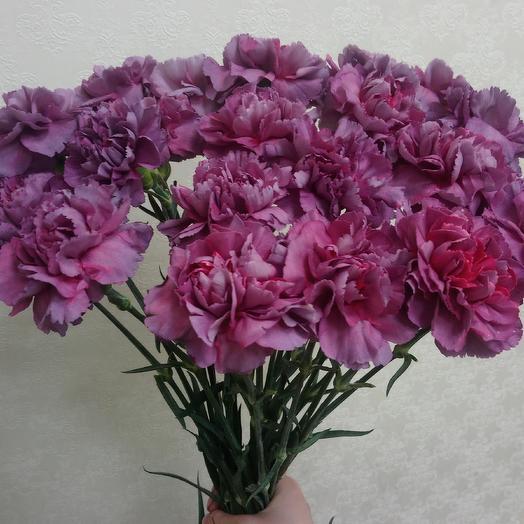 Гвоздика Hypnosis: букеты цветов на заказ Flowwow
