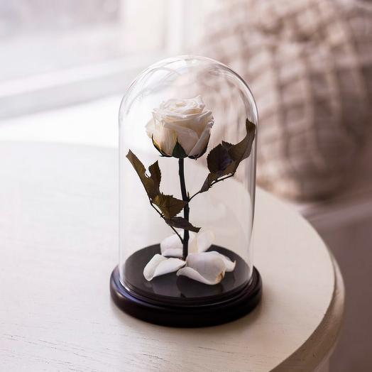 Роза в колбе «Premium» белая