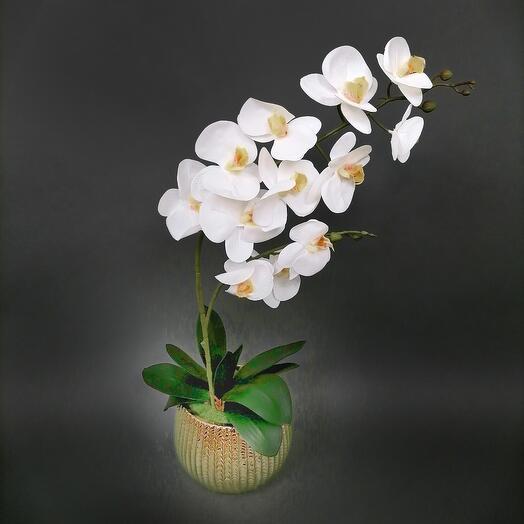 Орхидейный декор белый