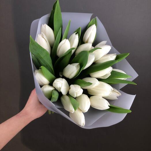 Тюльпаны моно 🌷