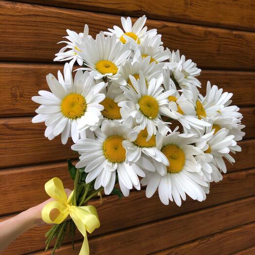 Flowers Lovers - 19 крупных ромашек