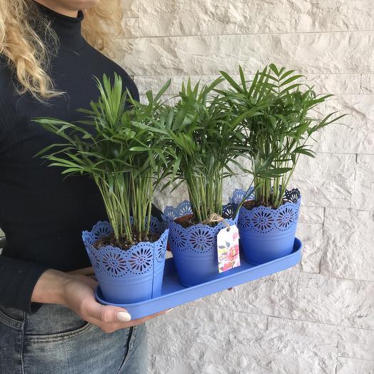 Три пальмы: букеты цветов на заказ Flowwow