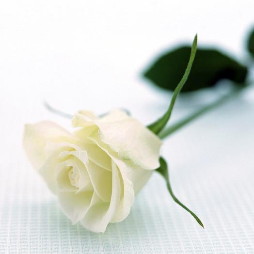 Белые розы 70 см