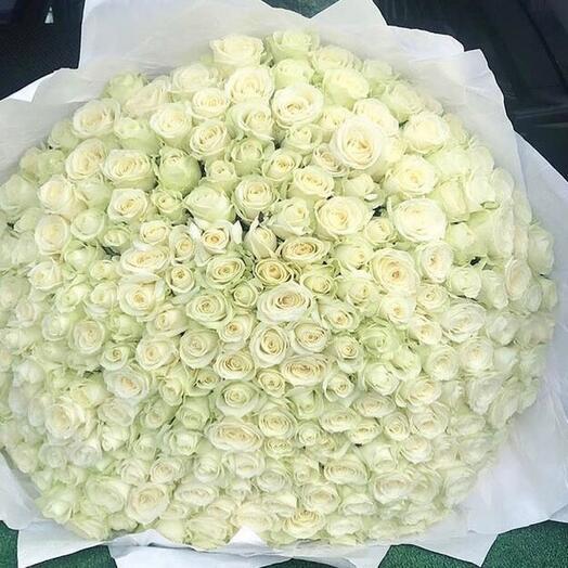 Роза Аваланж 80 см