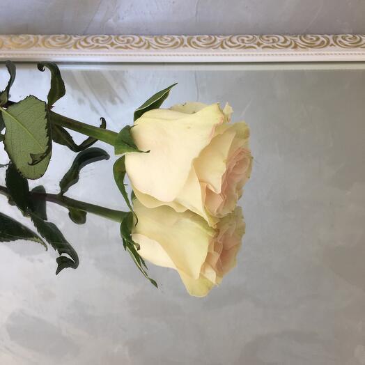 Роза priority