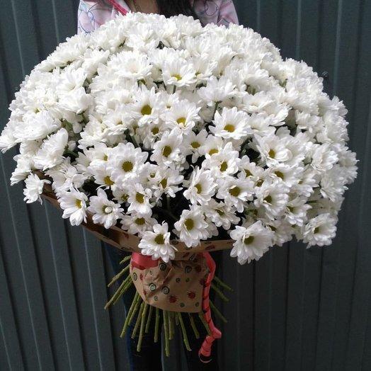 Букет из 41 кустовой хризантемы