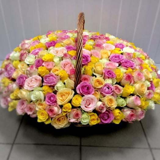 303 розы
