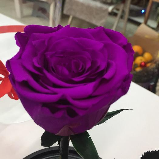 Роза в стеклянной колбе: букеты цветов на заказ Flowwow