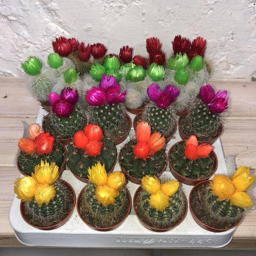 Кактус с искусственным цветком: букеты цветов на заказ Flowwow