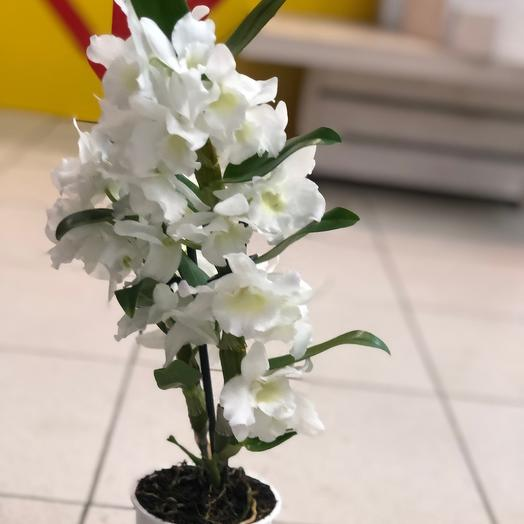 Орхидея: букеты цветов на заказ Flowwow