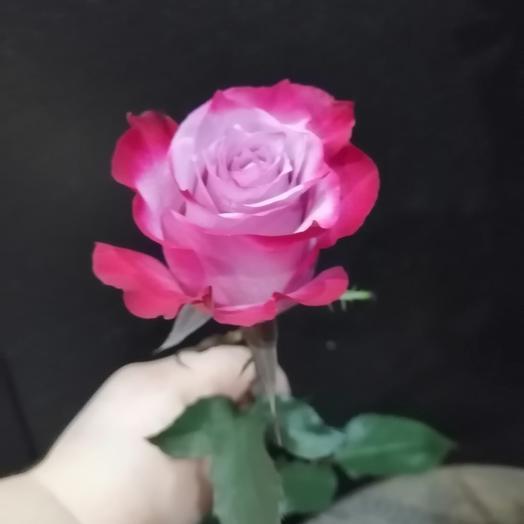 Роза Deep Purple 1шт 50см