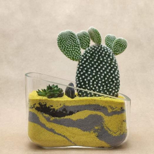 Весёлый кактус