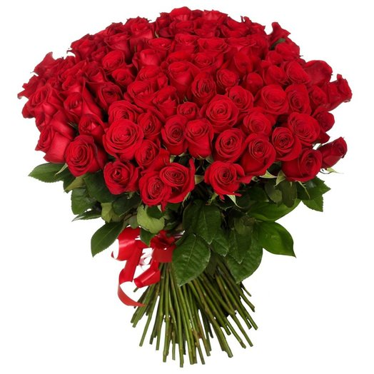 77 красных роз
