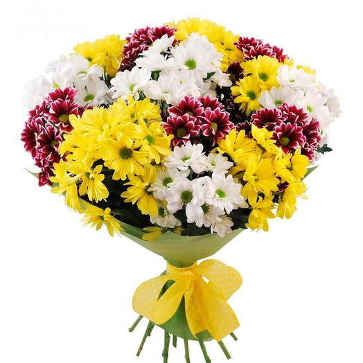 15 разноцветных кустовых хризантем