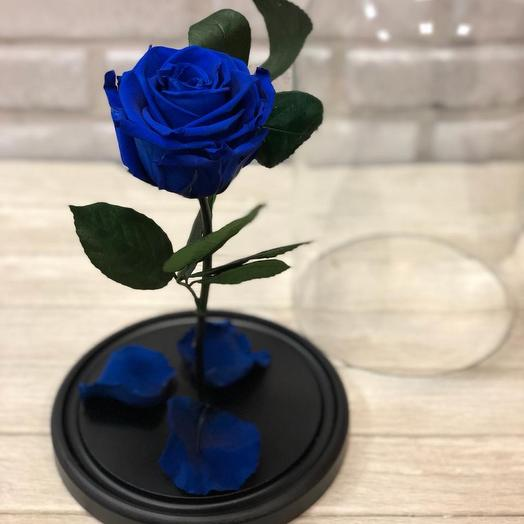 Синяя Роза Premium Size: букеты цветов на заказ Flowwow