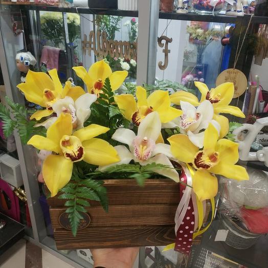 Орхидеи в ящике