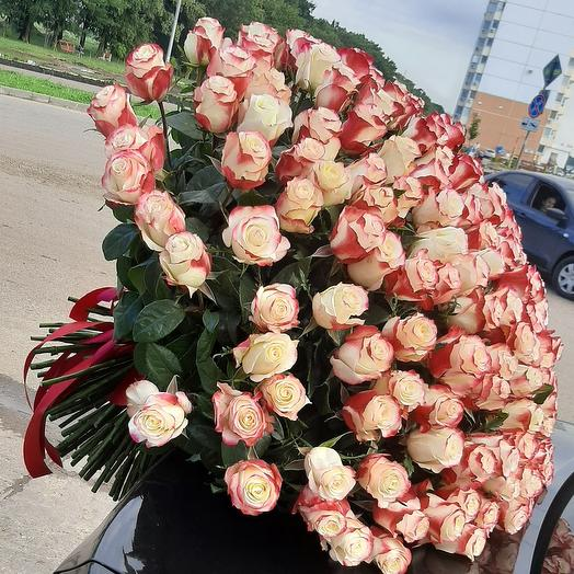 Роза 🥰🥰🥰 201шт