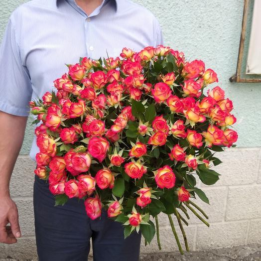 Роза кустовая 15