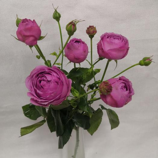 Роза кустовая мисти баблс