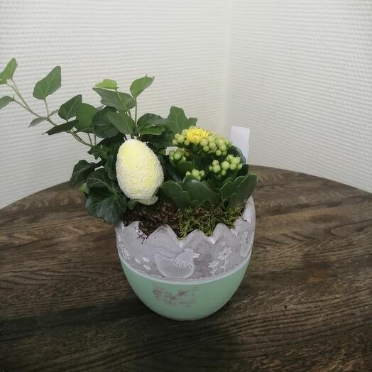 Комнатное растение,, пасхальнач композиция