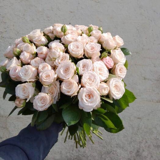 51 кремовая кустовая роза