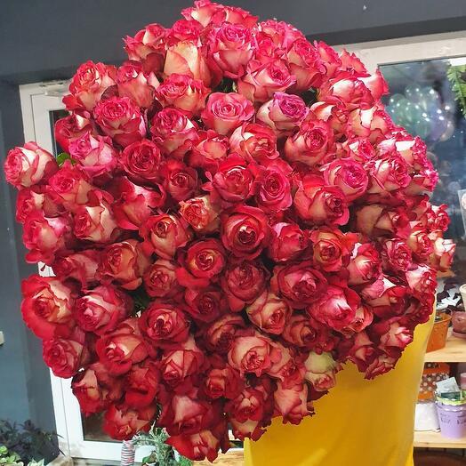 101 роза IGUAZU