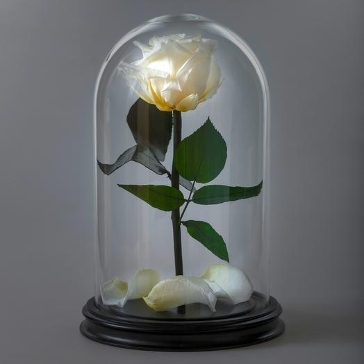 Роза в колбе белая премиум