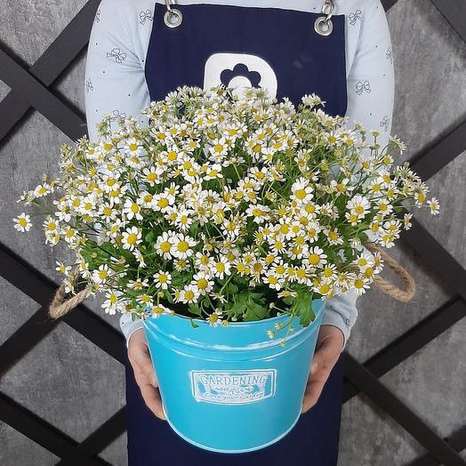 Непослушная Гертруда: букеты цветов на заказ Flowwow