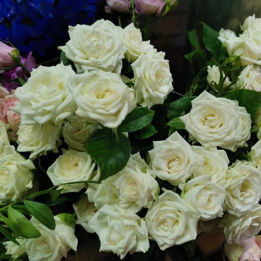Кустовая роза Жозефина