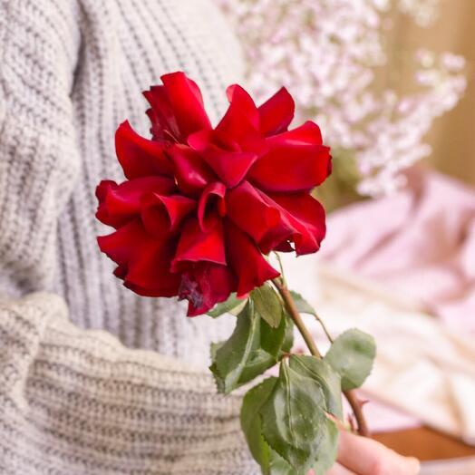 Французские розы от LU FLOWERS