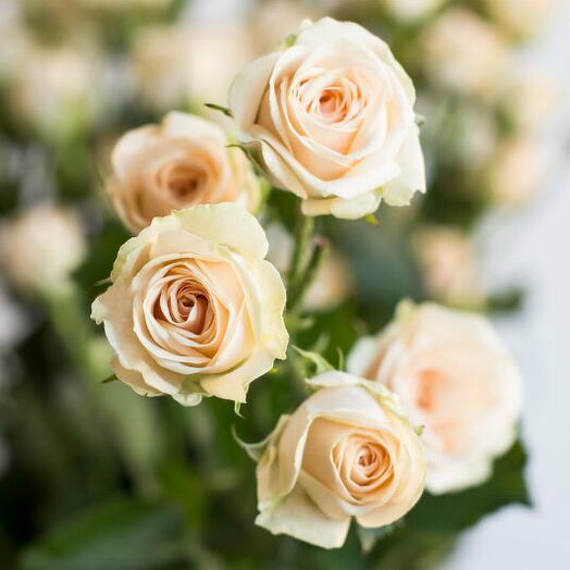 ✅ Роза Кустовая Яна (кол-во любое, ветка)