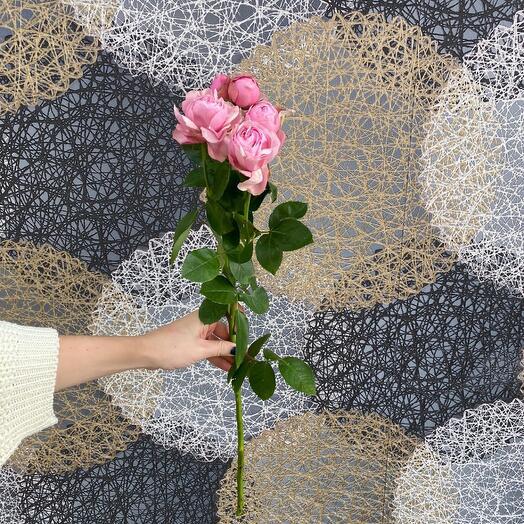 Роза кустовая, пионовидная