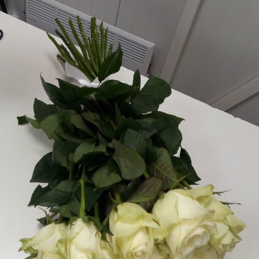 Шикарные длинные белые розы 25 штук