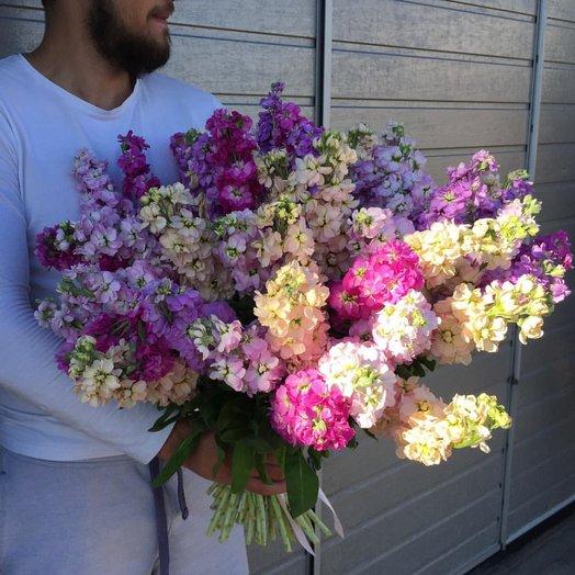 Маттиола микс: букеты цветов на заказ Flowwow