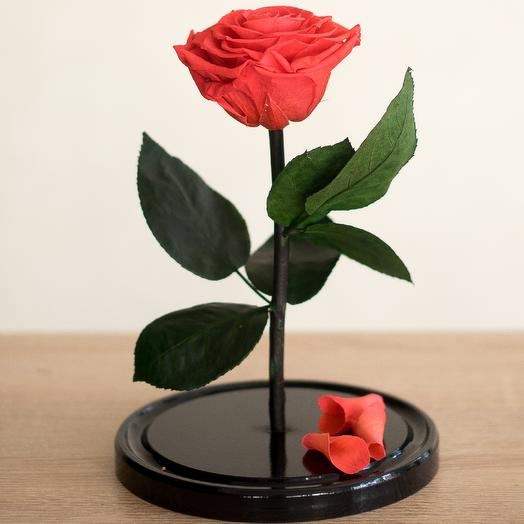 Роза в колбе Медиум оранжевая: букеты цветов на заказ Flowwow