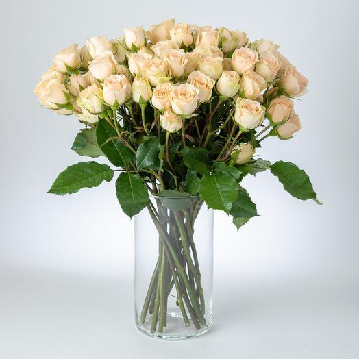Роза кустовая «Априкот»