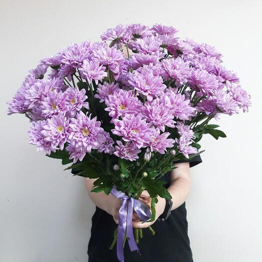 Chrysanthemum pink-lilac