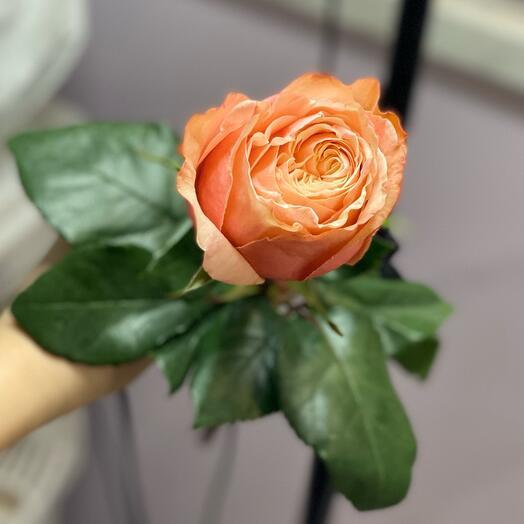 Роза Кахала🌸