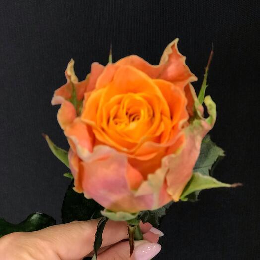 Роза Кантри Спирит Луиз 40 см