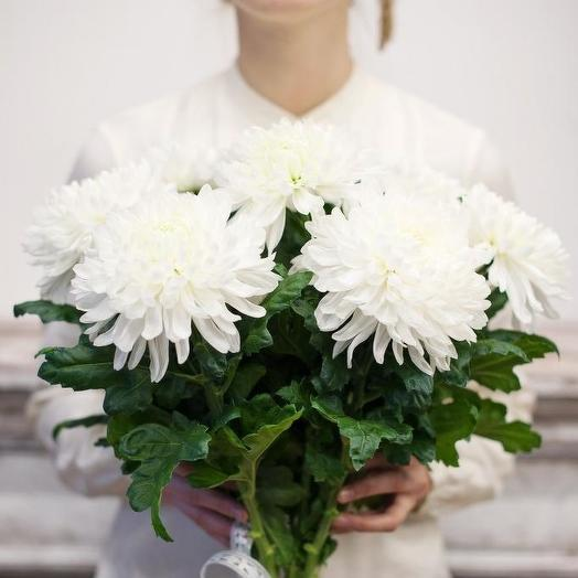 Букет из 7 белых хризантем: букеты цветов на заказ Flowwow
