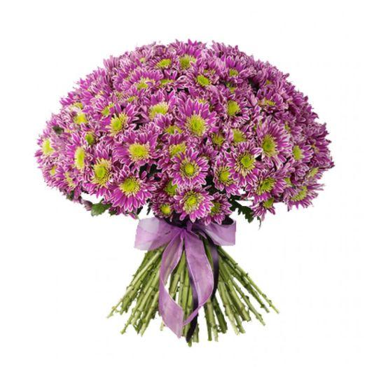 Букет из 55 розовых хризантем: букеты цветов на заказ Flowwow