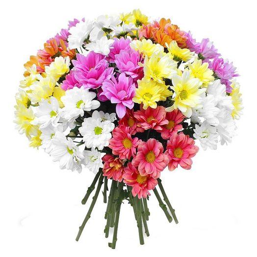 Букет из 21 разноцветной хризантемы одноголовой: букеты цветов на заказ Flowwow