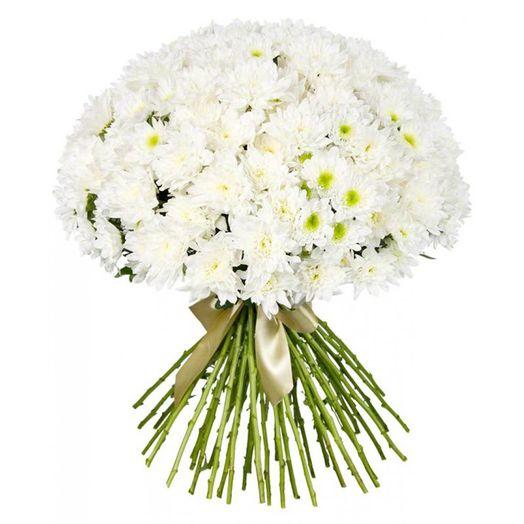Букет из 51 белой хризантемы одноголовой: букеты цветов на заказ Flowwow