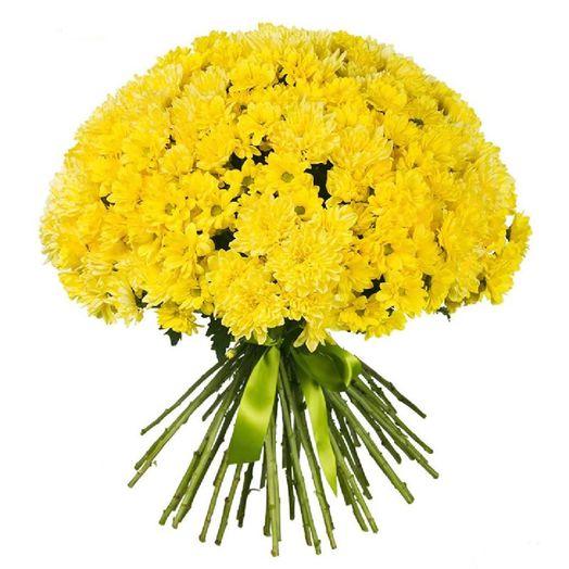 Букет из 101 желтой хризантемы одноголовой: букеты цветов на заказ Flowwow